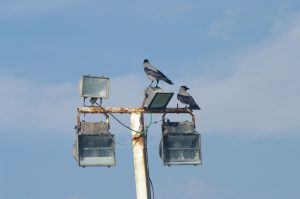 Birds perching on a lighting fixture