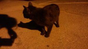 a Black Cat at Night
